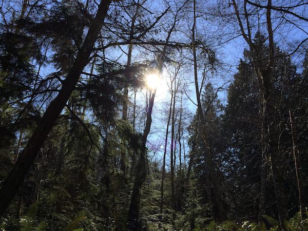 blakeforest