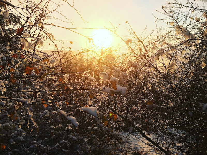 F_leaves n sun
